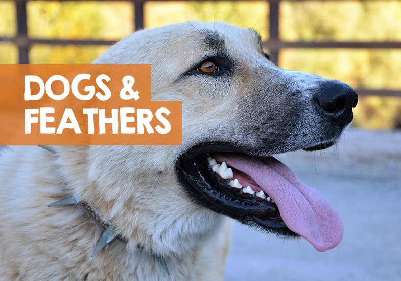 why dogs like feathers