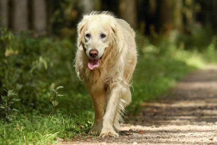 how long can a dog live with arthritis