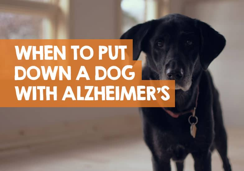 when to put down a dog with alzheimers