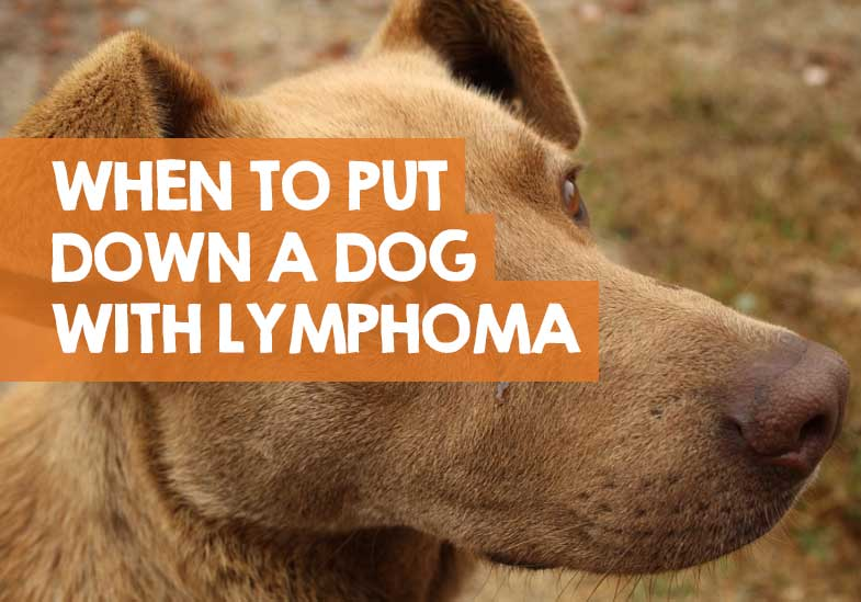 when it is time to put your dog down with lymphoma