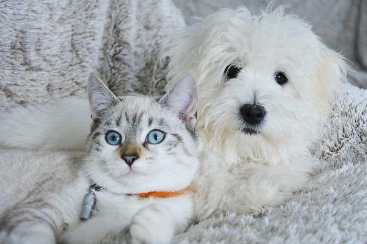 dog suddenly aggressive towards cat
