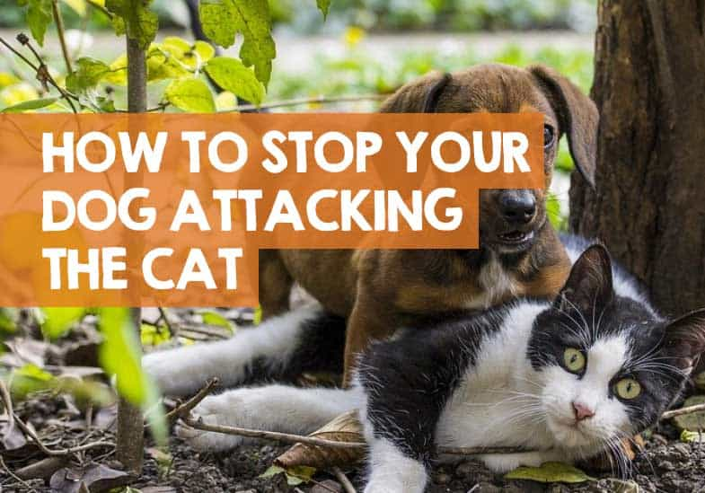 how do I get my dog to stop attacking the cat