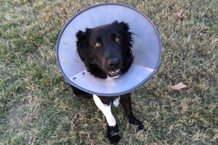 dog home alone with cone on