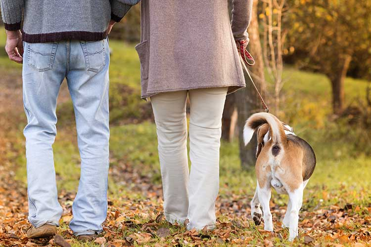 how long before a dog can walk after ACL surgery