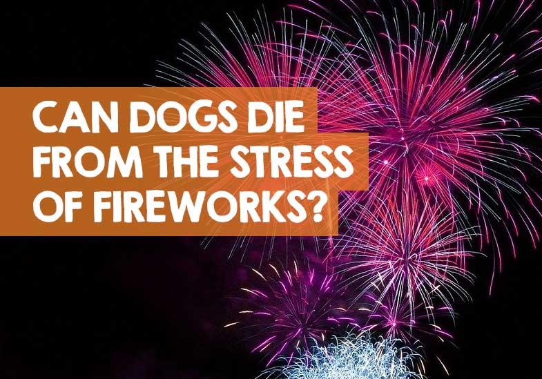 Can Dogs Die from Stress of Fireworks