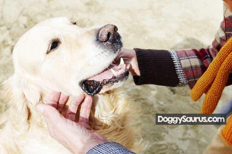how to soften dog's eye crust