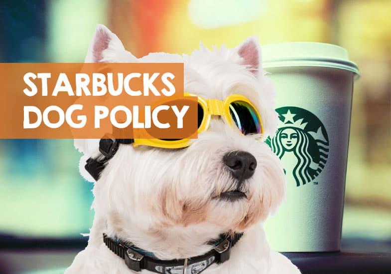 is starbucks dog friendly