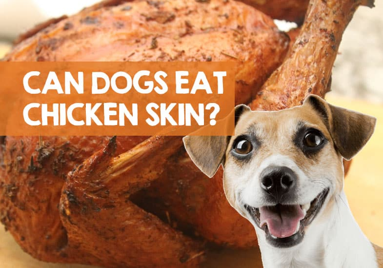 Can Dogs Eat Chicken Skin? Raw, Fried