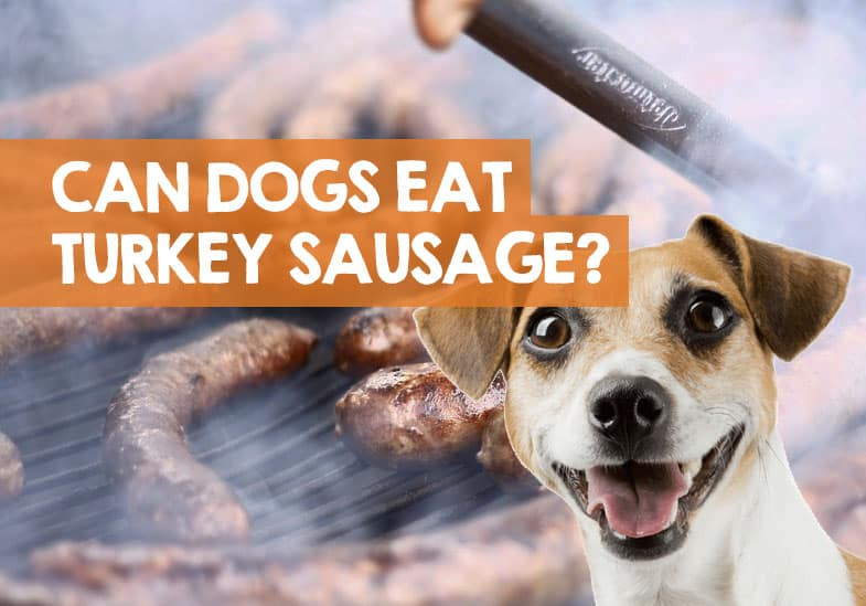 can dogs eat turkey sausage links