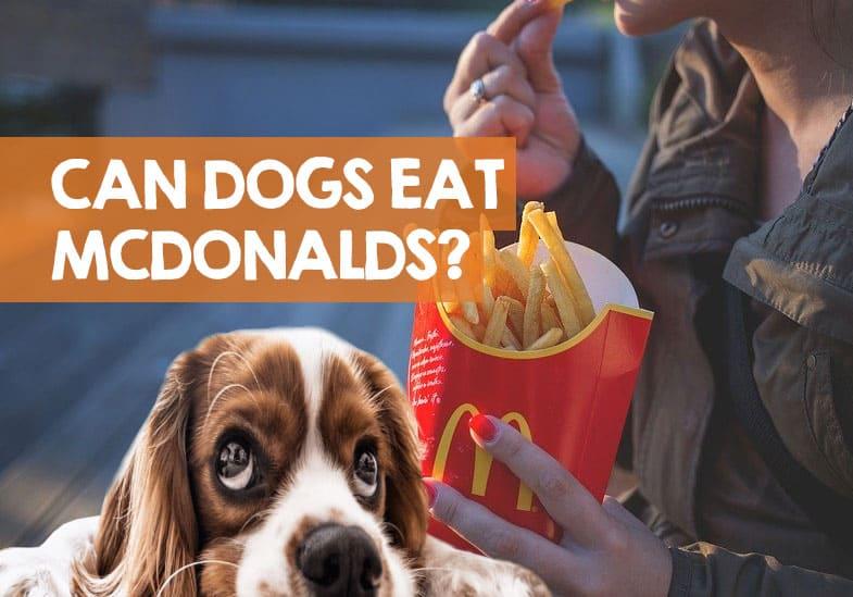 Can Dogs Eat Mcdonalds Dog Friendly Mcdonald S Food List