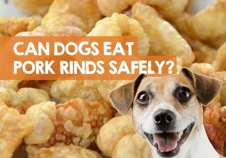 Can Dogs Eat Pork Rinds Pork Skins Crackling Scratchings Safe