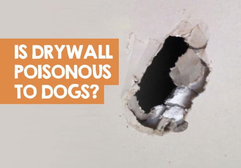 is drywall poisonous to dogs