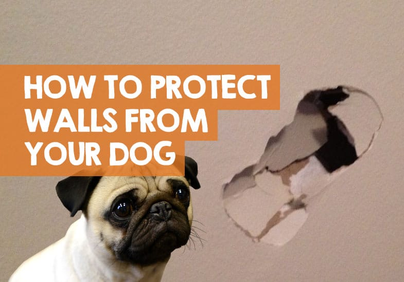 How to Protect Drywall from Dog