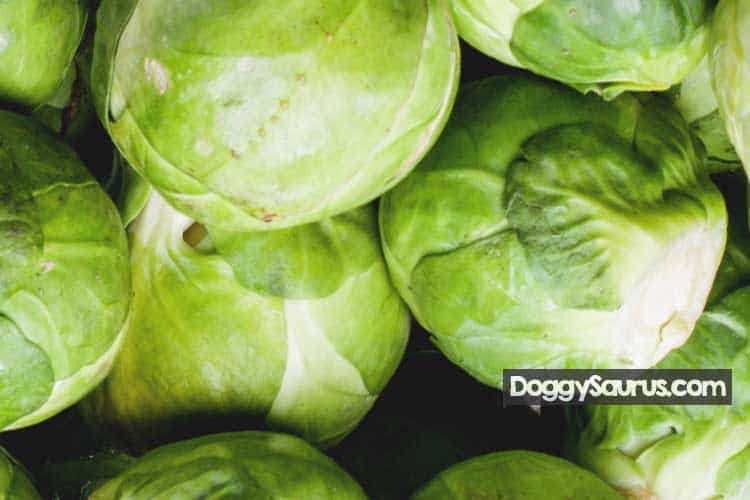 are brussel sprouts good for dogs