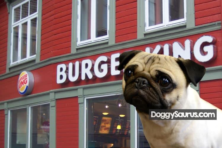 dog at burger king