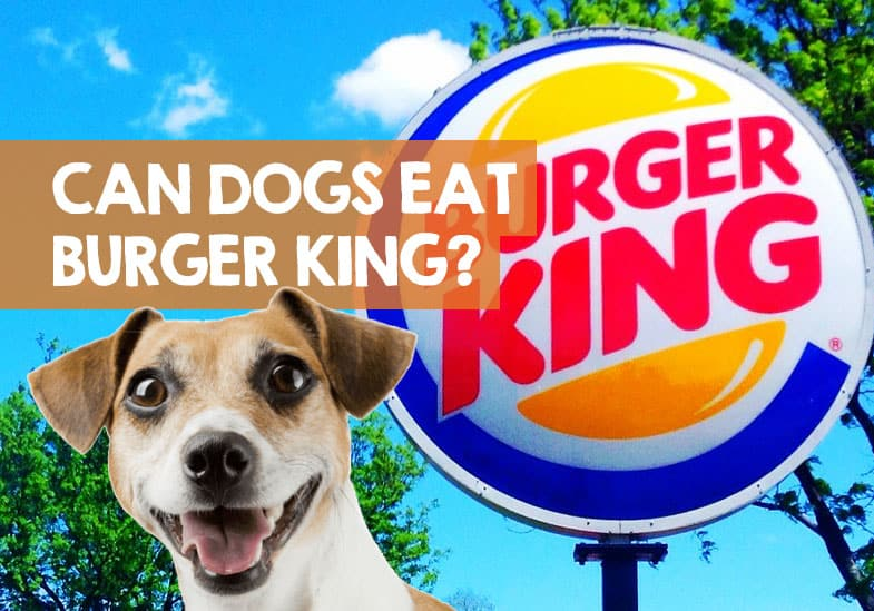 can dogs eat burger king