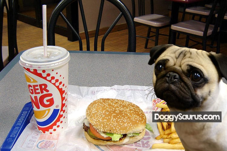 what can my dog eat from burger king