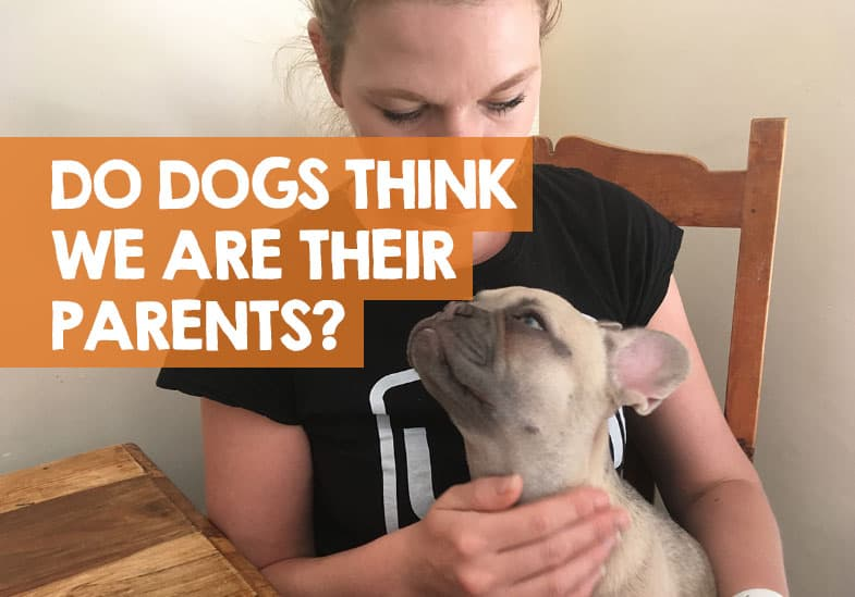 Do dogs think we are their parents