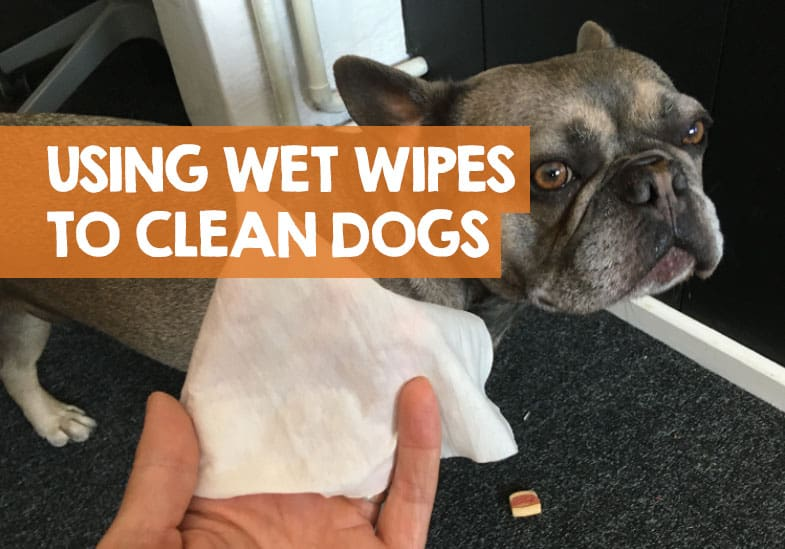 Can You Use Baby Wipes to Clean a Dog