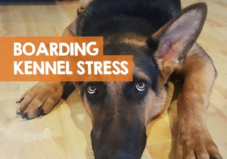 boarding kennel stress in dogs