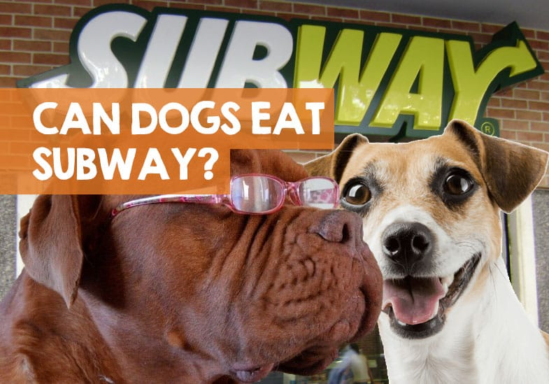 what can dogs eat at subway sandwiches  cookies