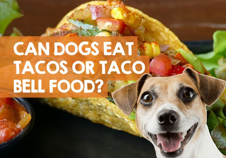 Can Dogs Eat Tacos Or Taco Bell Meat Dog Friendly Menu