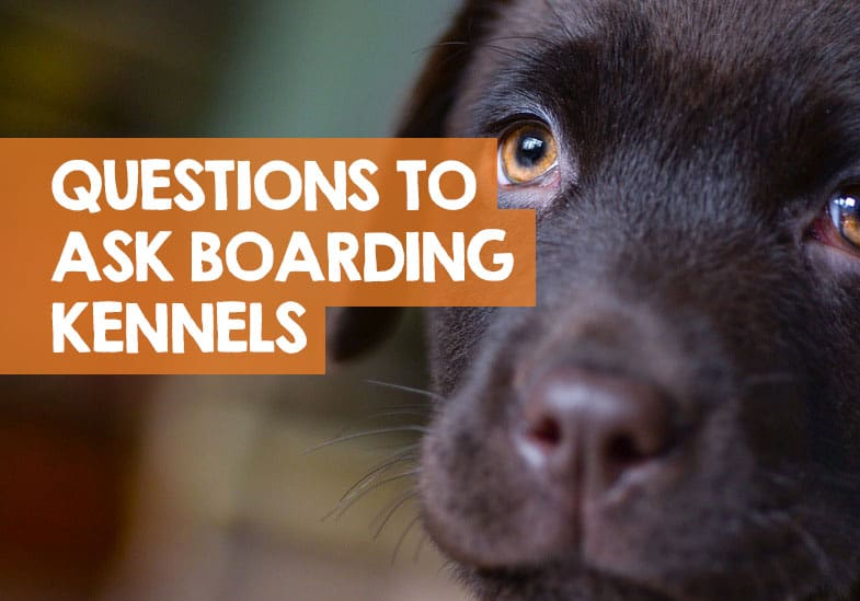 questions to ask dog boarding kennels