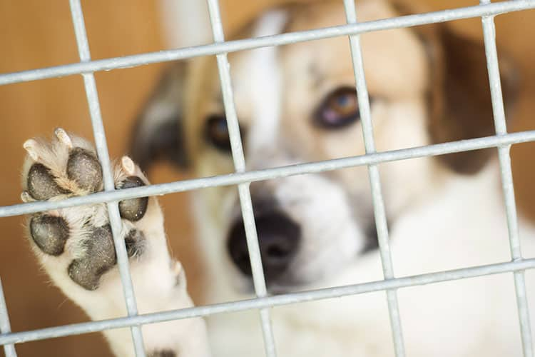 questions to ask a boarding kennel