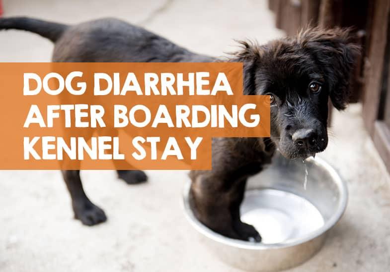 dog diarrhea after boarding