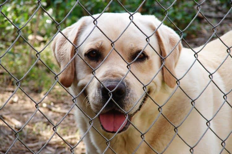 will my dog be ok in boarding kennels