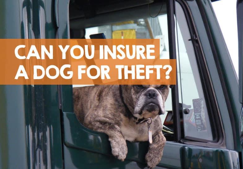 dog theft insurance