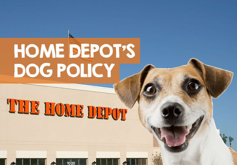 does home depot allow dogs
