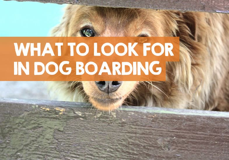 what should I look for in dog boarding