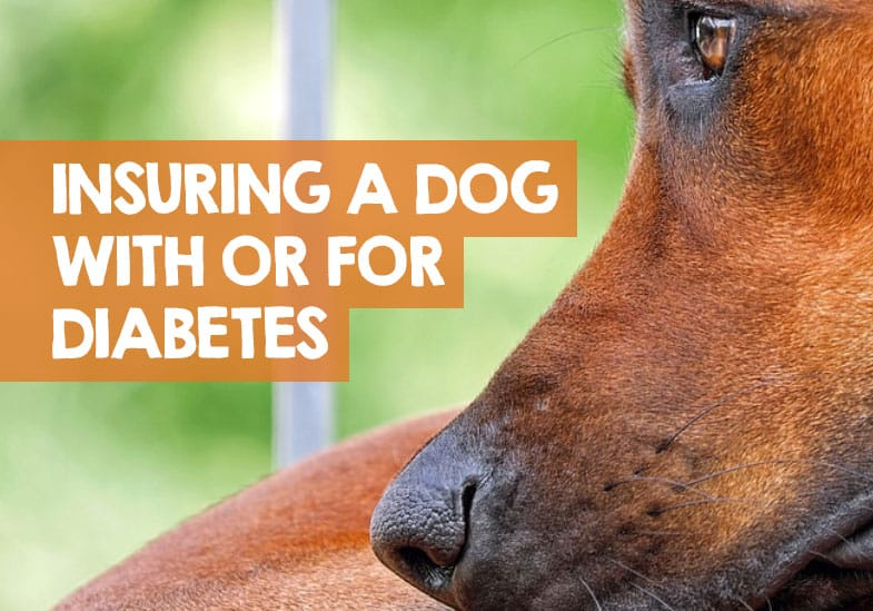 Does Pet Insurance Cover Diabetes? Yes & No: Here's Why