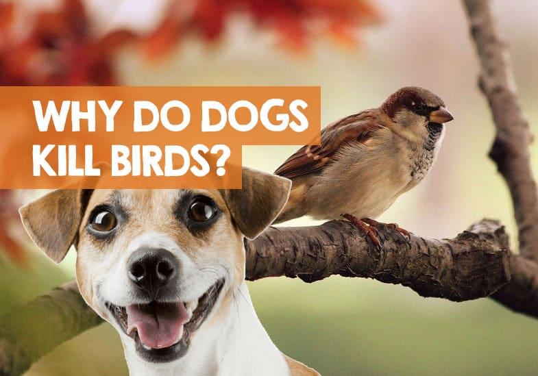 why do dogs kill birds