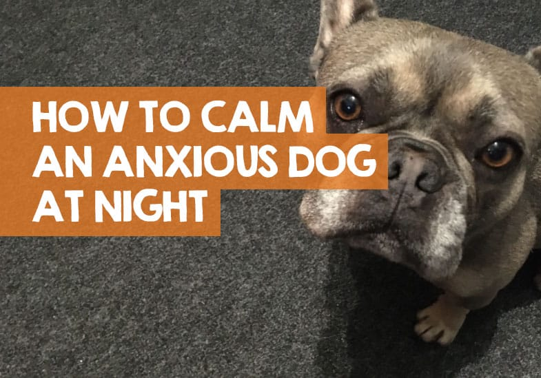 how to calm an anxious dog at night
