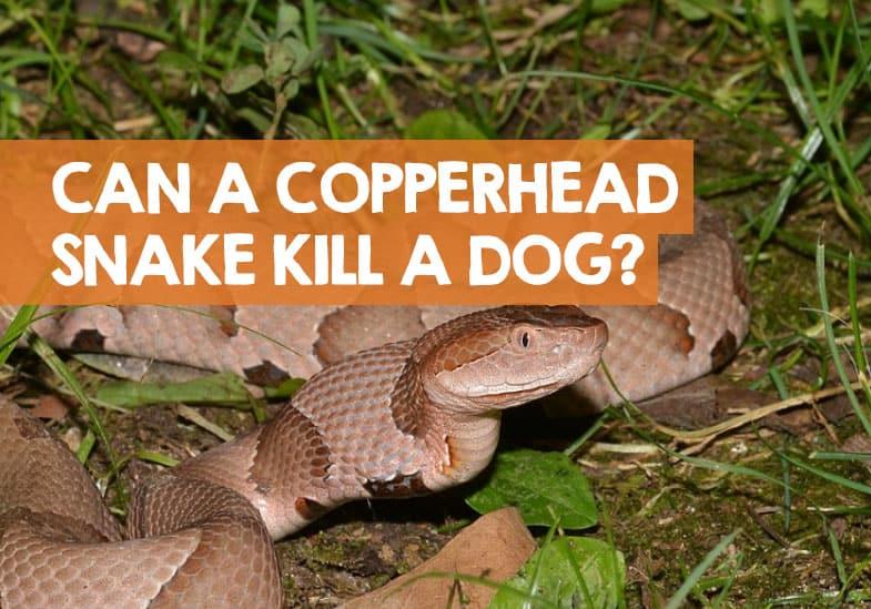 can a copperhead bite kill a dog