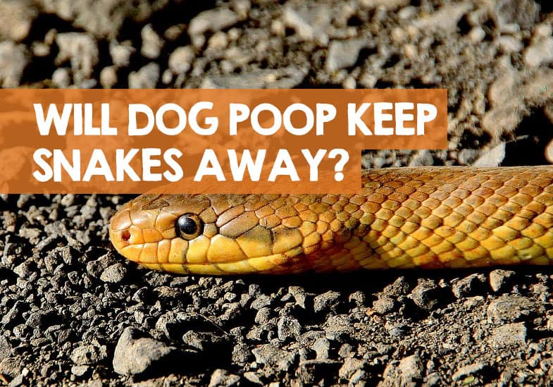will dog poop keep snakes away
