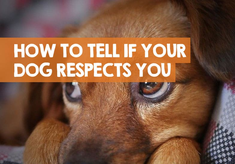 How Do You Tell If Your Dog Respects You