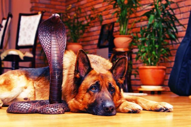 snake dogs