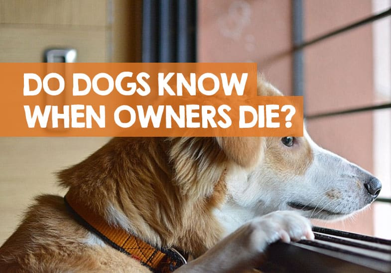 do dogs know if their owner dies