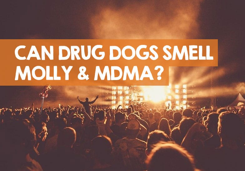 can drug dogs smell mdma