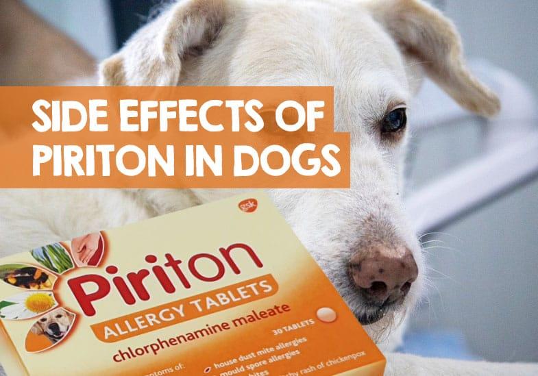 dog piriton side effects