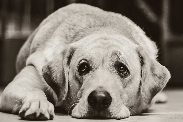 do dogs know when their owner dies