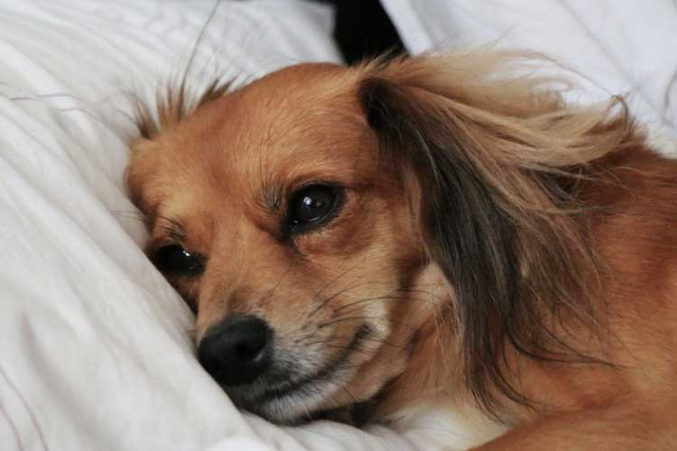 Do dogs grieve when owner dies