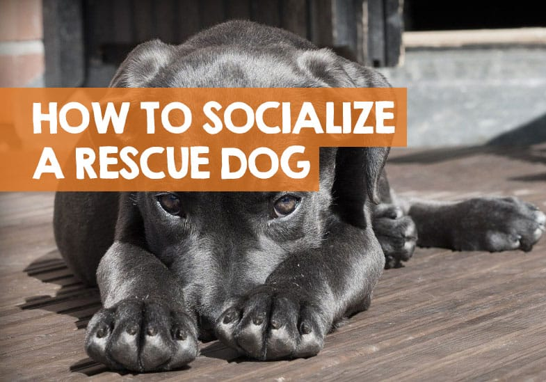 how to socialize a rescue dog
