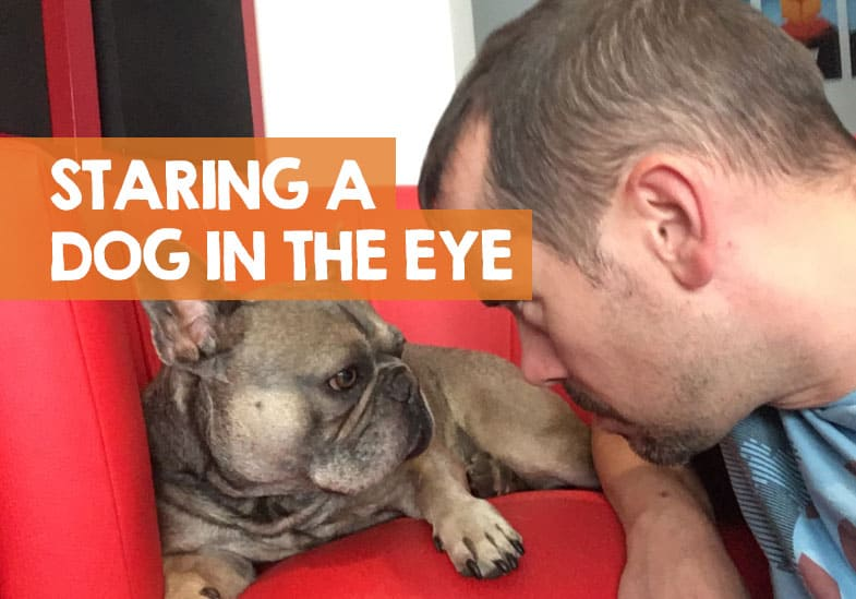 is it bad to stare a dog in the eyes