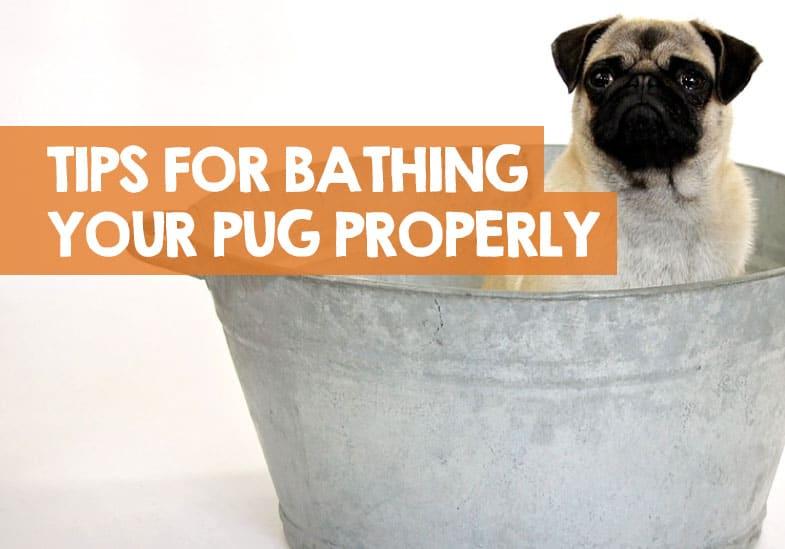 how often to bathe pugs