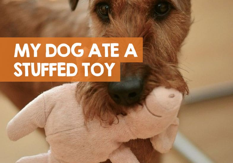 My Dog Ate Polyester Stuffing from a