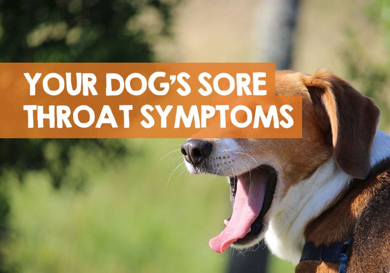 dog sore throat symptoms